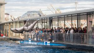 Acquario di Genova, quando il team building è tailor made in una location unica